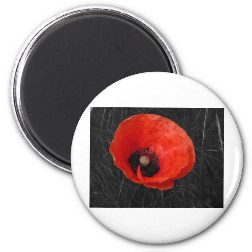 Mohnblume red poppy Photo Foto Fridge Magnets