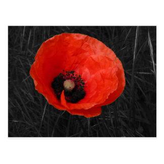 Mohnblume red poppy Photo Foto Postcards