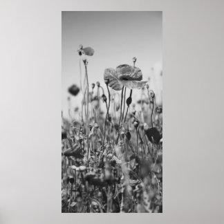 Mohnblumen Schwarz Weiß Plakatdruck
