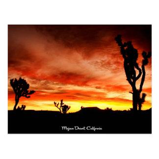 Mojave Desert, California Postcard