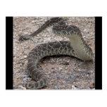 Mojave Rattlesnake Postcard
