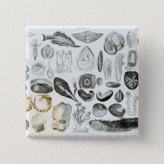 Molluscs 15 Cm Square Badge
