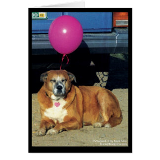 Molly the Dog Note Card
