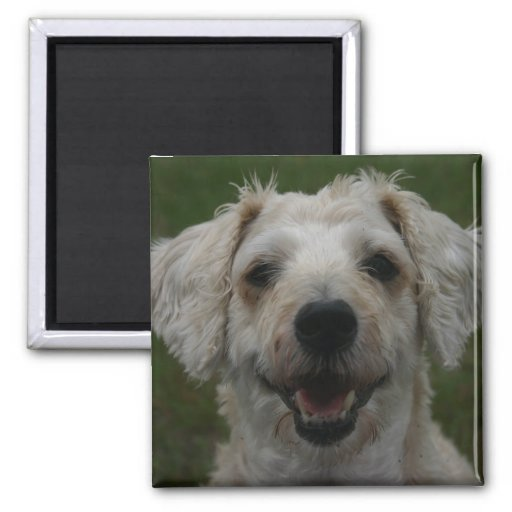 Mollywog the Dog Magnet