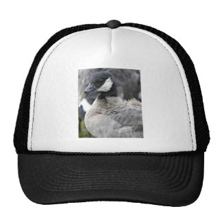 Molting cackling Canada goose Mesh Hat