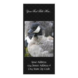 Molting cackling Canada goose Rack Card Design