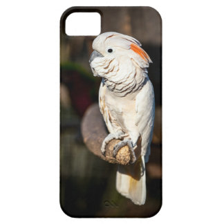 Moluccan Cockatoo parrot phone case