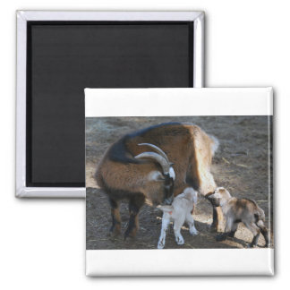 Mom and Babies Square Magnet