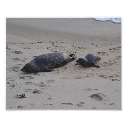 Momma and Baby finding a spot on the beach Photograph