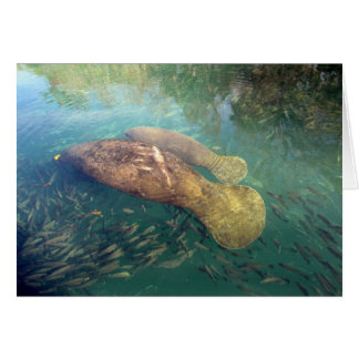 Momma and Baby Manatee Mother's Day Card