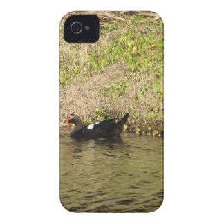 Momma Muscovy and Baby Ducks Case-Mate Case iPhone 4 Case-Mate Cases