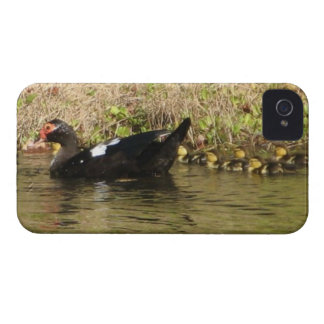 Momma Muscovy and Baby Ducks iphone case Case-Mate iPhone 4 Cases