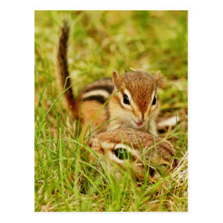 Mommy and Baby Chipmunk Postcard