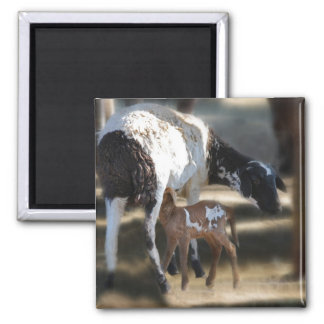 Mommy & Baby Goat Square Magnet