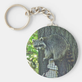 Mommy Raccoon on Suet Keychain