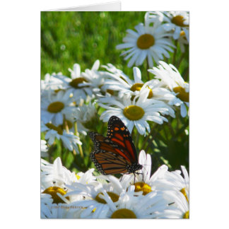Monarch and Daisies Card