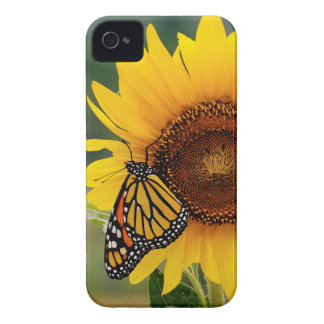 Monarch Butterfies on Sunflower iPhone 4 Case-Mate Cases