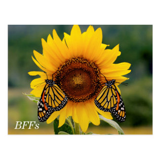 Monarch Butterfies on Sunflower Postcard