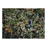 Monarch butterflies invites