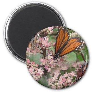 Monarch Butterflies Magnets