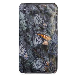 Monarch Butterflies on Pine Tree, Sierra Chincua 2 iPod Touch Case