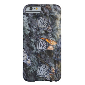 Monarch Butterflies on Pine Tree, Sierra Chincua 2 Barely There iPhone 6 Case