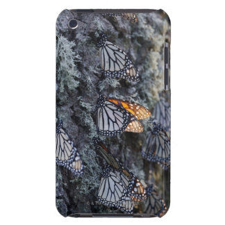 Monarch Butterflies on Pine Tree, Sierra Chincua 2 iPod Touch Case-Mate Case