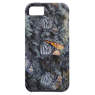 Monarch Butterflies on Pine Tree, Sierra Chincua 2 Case For The iPhone 5