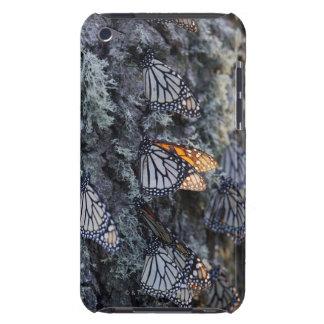 Monarch Butterflies on Pine Tree, Sierra Chincua 2 Case-Mate iPod Touch Case