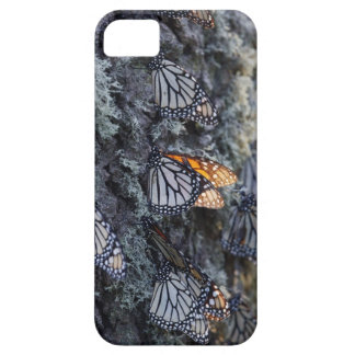Monarch Butterflies on Pine Tree, Sierra Chincua 2 iPhone 5 Cover