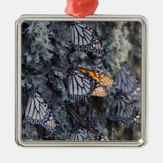 Monarch Butterflies on Pine Tree, Sierra Chincua 2 Silver-Colored Square Decoration