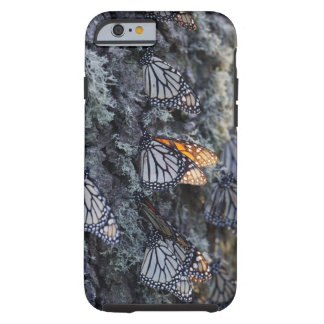 Monarch Butterflies on Pine Tree, Sierra Chincua 2 Tough iPhone 6 Case