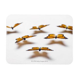Monarch Butterflies Rectangular Photo Magnet