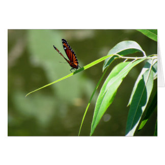 Monarch Butterfly (4088) Greeting Card
