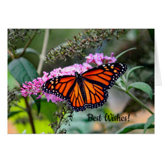 Monarch Butterfly 5100 Wedding Congrats Card