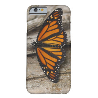 Monarch Butterfly Barely There iPhone 6 Case