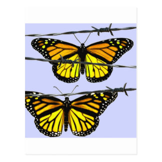 Monarch butterfly  behind barbed wire post cards