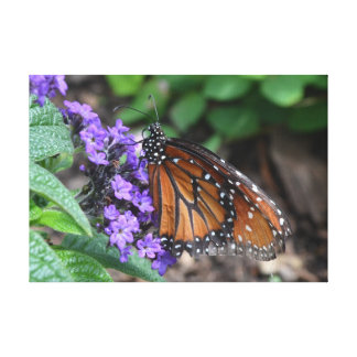 Monarch Butterfly Canvas Print