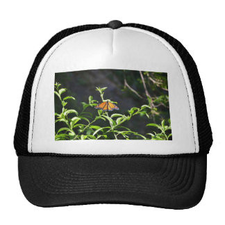 Monarch Butterfly. Cap
