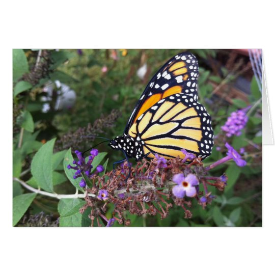 Monarch Butterfly Card 2