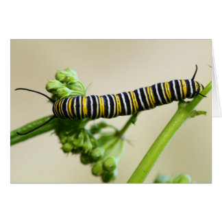 Monarch Butterfly Caterpillar Feeding on Milkweed Card