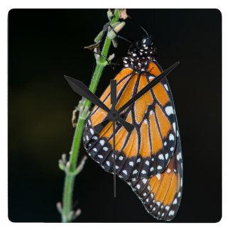 Monarch Butterfly Clocks
