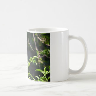 Monarch Butterfly. Coffee Mug