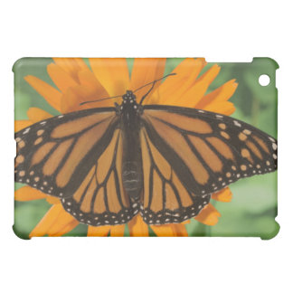 Monarch butterfly (Danaus plexippus) on pot Case For The iPad Mini
