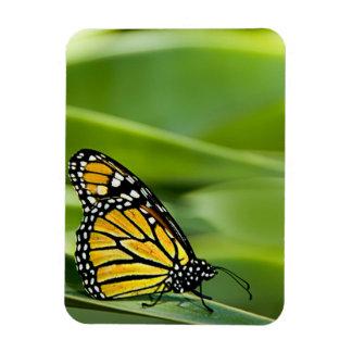 Monarch Butterfly Design Flexible Magnet Flexible Magnet