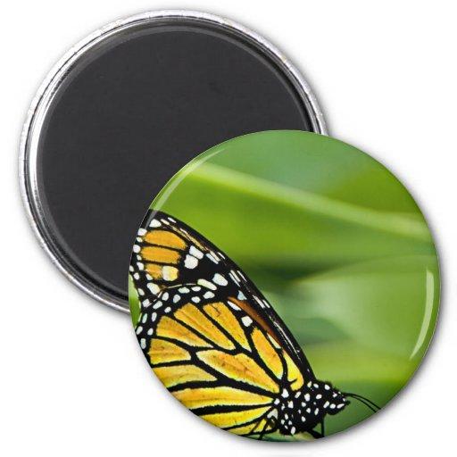 Monarch Butterfly Design Magnet Magnet