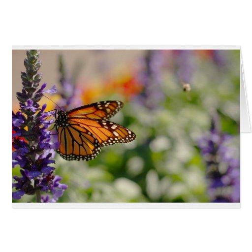 Monarch Butterfly Feeding Blank Card