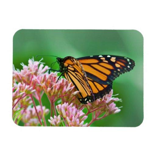 Monarch Butterfly Flexible Magnet