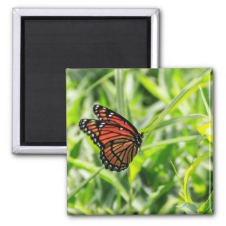 Monarch butterfly in flight square magnet