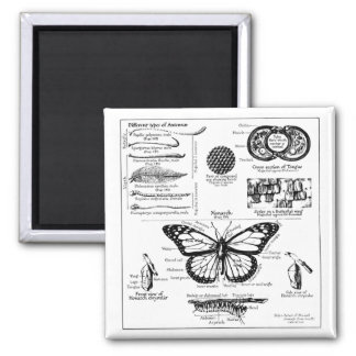 Monarch Butterfly Information Magnet